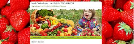 website design elements of vibrant visuals